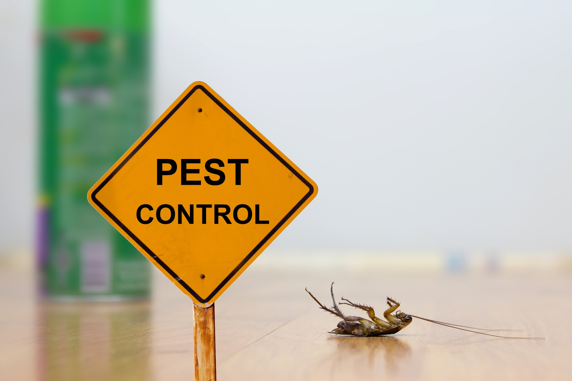 24 Hour Pest Control, Pest Control in East Finchley, N2. Call Now 020 8166 9746
