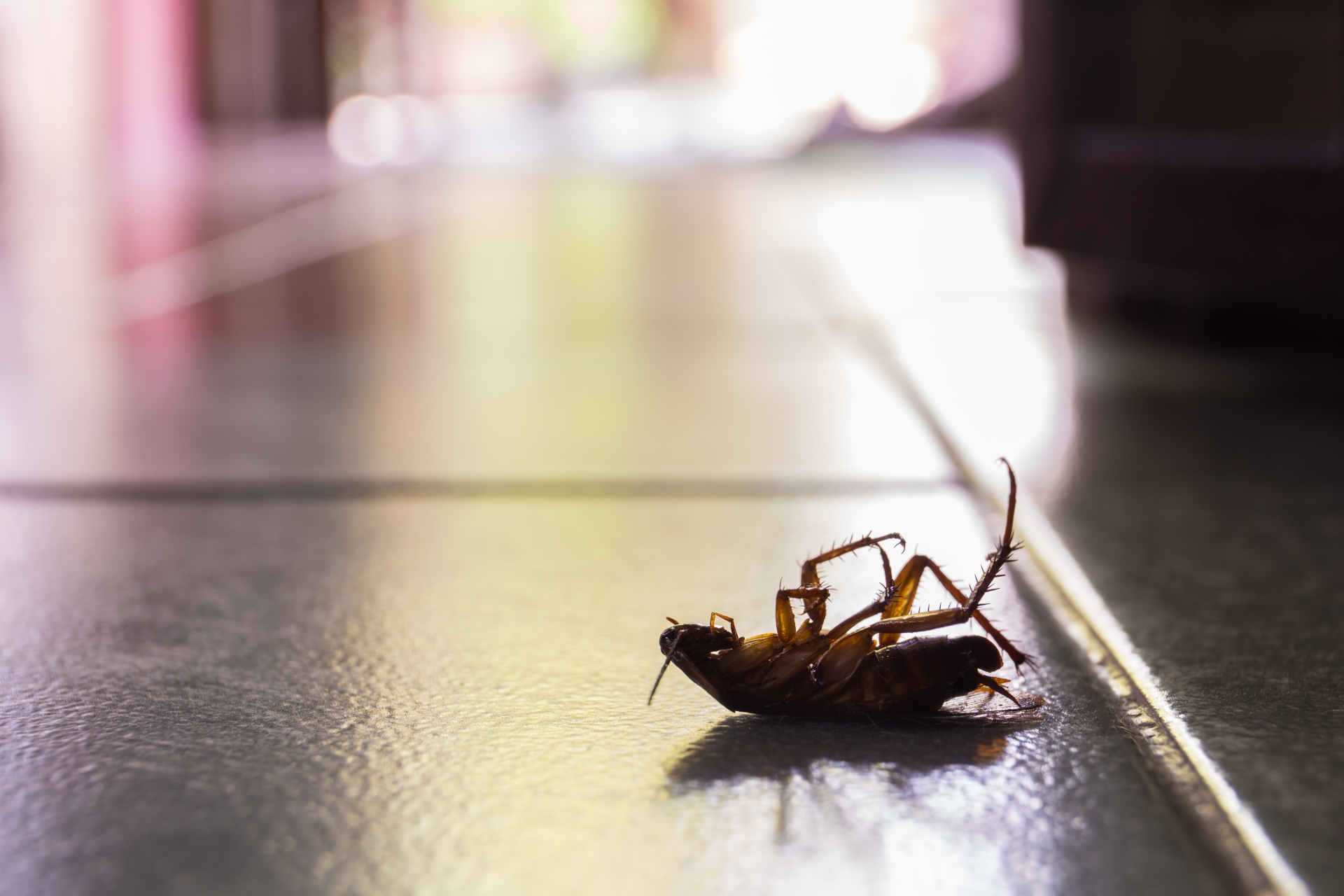 Cockroach Control, Pest Control in East Finchley, N2. Call Now 020 8166 9746
